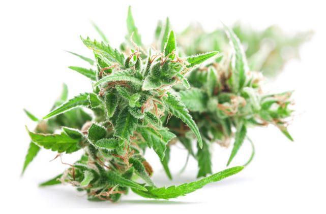 Das Comeback der Cannabismedizin
